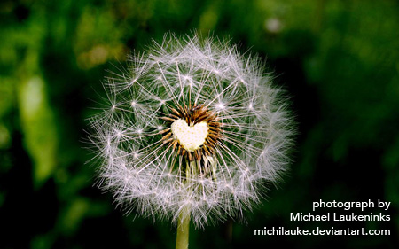 Dandelion with heart pollen in center, image